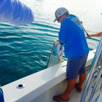 Capt Rich Andretta landing a nice silver king tarpon for his clients on a Tampa Bay fishing charter