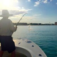 Launching tarpon in the air while fishing off Anna Maria Island