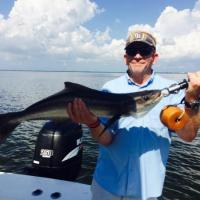 Surprise visit from Mr. Cobia on this Tampa Bay fishing charter