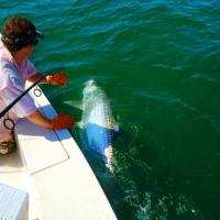 Capt Rich Andretta wrestling this giant tarpon in Tampa Bay near the Skyway bridge on a fishing trip