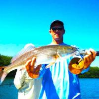 Mid slot redfish during a spring fishing trip in Tampa Bay