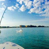 Giant tarpon dancing off Long Boat Key during a tarpon charter