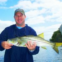 Nice St Petersburg Snook during his fishing charter