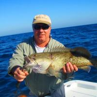 A nice Tampa Bay grouper while on a fishing charter