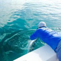 Capt Rich Andretta landing a tarpon boat side for a client during this Tampa Tarpon fishing charter