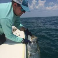 Capt Rich Andretta grabbing a tarpon boat side on a tarpon fishing charter.