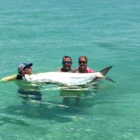 Capt Rich and clients with a monster tarpon off the waters of Anna Maria Island on a tarpon charter